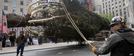 Rockefeller Center Christmas Tree 2012: Spruce That Survived Sandy ...